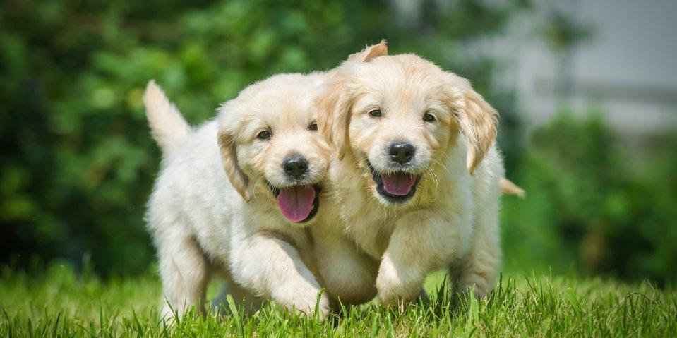 o-SMILING-ANIMAL-facebook