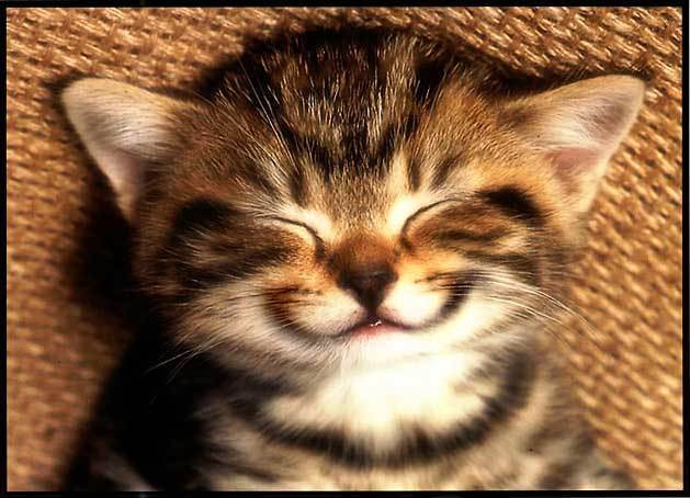 smiling_cat_small1